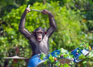 majom a dobnál_n